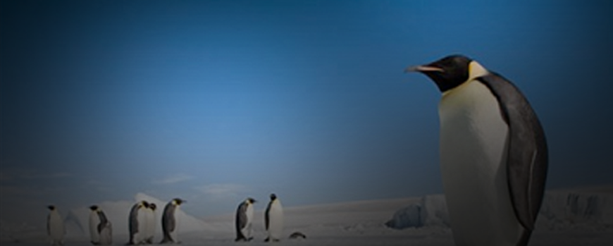 How Penguin 2.1 Improves Search Results