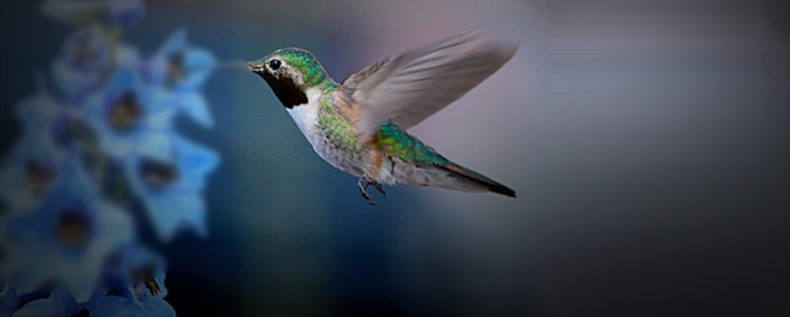 What Is Hummingbird & Why It's Good For Search